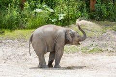 Vue d'un jeune éléphant dans un zoo Photographie stock libre de droits