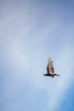 Vue d'un vol d'oiseau sur un fond de ciel bleu Photos stock