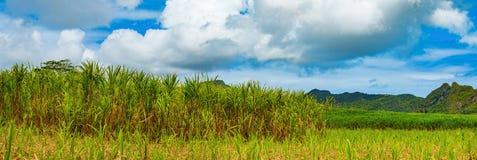 Vue d'une canne à sucre et des montagnes mauritius Panorama Image libre de droits
