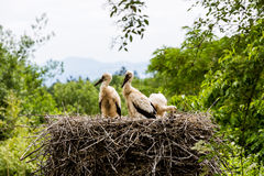 Vue d'une famille de cigogne dans le zoo Photos stock
