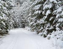 Vue d'une forêt d'hiver, Bohême du sud photos stock