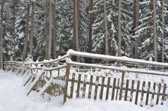 Vue d'une forêt d'hiver, Bohême du sud photographie stock libre de droits