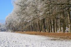 Vue d'une forêt d'hiver, Bohême du sud image stock