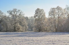 Vue d'une forêt d'hiver, Bohême du sud images libres de droits