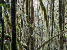 Vue d'une jungle Photos stock