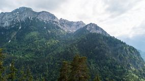 Vue d'une taille à une gamme de montagne avec les arbres coniféres Images libres de droits