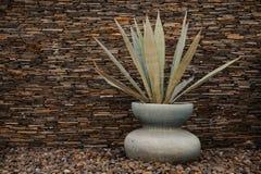 Vue d'usine americana d'agave dans un vase Photographie stock