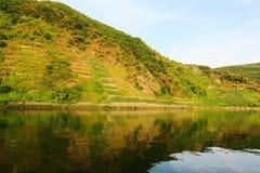 Vue dans un vignoble à la rivière de la Moselle Image stock