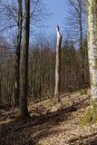 Vue dans une forêt au printemps Photographie stock libre de droits