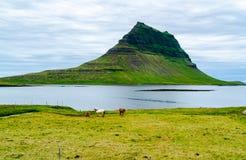 Vue de bâti Kirkjufell avec des chevaux frôlant dans le domaine Photo stock