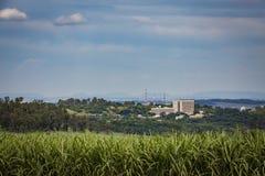 Vue de bâtiment de Ribeirao Preto et gisement de canne à sucre photo libre de droits