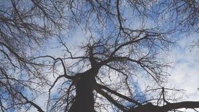 Vue de bas en haut d'un arbre sans feuilles contre un ciel bleu clips vidéos