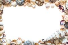 Vue de beaux diff?rents coquillages d'isolement sur le fond blanc avec l'espace pour le texte Texture de coquillage de mollusque photo libre de droits