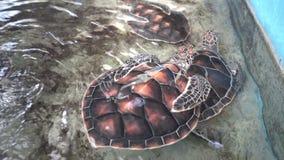 Vue de belles tortues dans l'aquarium thailand banque de vidéos