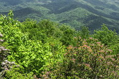 Vue de Blue Ridge Mountains Photographie stock