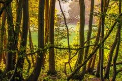 Vue de bois antérieur, Crowhurst, le Sussex est, Angleterre photographie stock