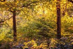 Vue de bois antérieur, Crowhurst, le Sussex est, Angleterre photos libres de droits