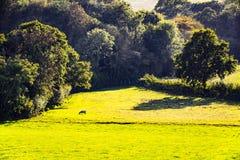 Vue de bois antérieur, Crowhurst, le Sussex est, Angleterre photos stock