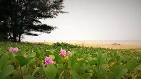 Vue de bord de la mer de nature à la baie Miri Sarawak Malaysia de Tanjung Lobang image libre de droits