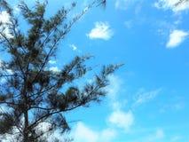 Vue de bord de la mer de nature à la baie Miri Sarawak Malaysia de Tanjung Lobang photos libres de droits