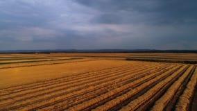 Vue de bourdon de champ de blé banque de vidéos