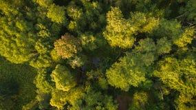 Vue de bourdon de forêt et de courant photographie stock libre de droits