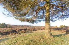 Vue de Bratley Photo stock