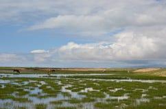 Vue de Buautifal le Lac Qinghai Photographie stock libre de droits