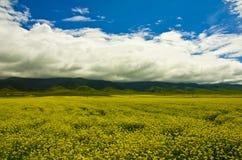 Vue de Buautifal le Qinghai Image stock