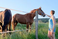Vue de côté d'une femme qui caressent des chevaux à un champ de ferme au coucher du soleil Photo stock