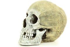 Vue de côté de crâne humain Image libre de droits