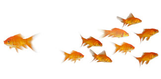 vue de côté 3D de la natation de poissons Photographie stock libre de droits