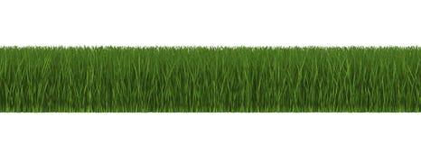 Vue de côté d'herbe verte d'isolement sur le blanc Image libre de droits