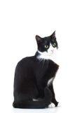 Vue de côté d'une séance noire et blanche de chat Images stock
