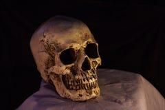 Vue de côté de crâne humain Photographie stock libre de droits