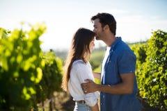 Vue de côté de front de baiser d'amie de l'homme au vignoble Photo stock