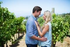 Vue de côté de jeunes couples regardant l'un l'autre dans le vignoble Photos stock