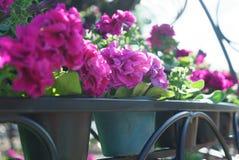 Vue de côté de plan rapproché des fleurs avec le bokeh formé artistique au b Images stock