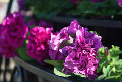Vue de côté de plan rapproché des fleurs avec le bokeh formé artistique au b Photo stock