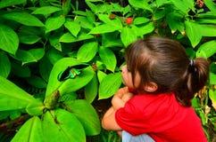 Vue de côté de profil de Birdwing de cairns photos libres de droits