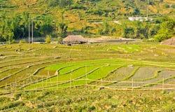 Vue de campagne des collectes de riz image libre de droits