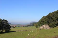 Vue de campagne, mouton en vallées de Yorkshire de champs Image libre de droits