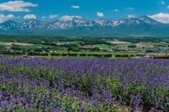 Vue de champ sage de pré dans Flowerland, Kamifurano, Hokkaido, J Photographie stock
