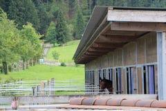 Vue de cheval Photographie stock