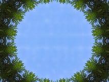 Vue de ciel bleu d'illustration de tunnel d'arbre de jungle Photographie stock libre de droits