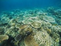 Vue de coraux de Tableau en récif coralien Photo sous-marine d'habitants tropicaux de bord de la mer Photographie stock libre de droits