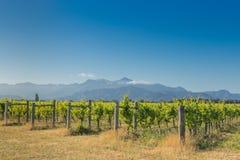 Vue de coucher du soleil d'un vignoble contre les montagnes éloignées Photos libres de droits