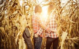 Vue de coucher du soleil de champ de maïs Image stock
