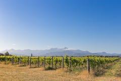Vue de coucher du soleil de vignoble contre les montagnes éloignées Image libre de droits