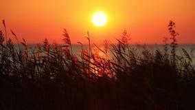 Vue de coucher du soleil de mer avec l'herbe sèche banque de vidéos